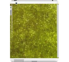 Green algae with air bubbles on a lake surface. iPad Case/Skin