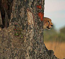 Lurking danger by Dan MacKenzie