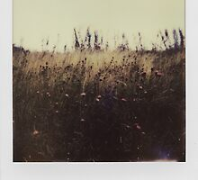 Fragile by Alysia Trackim