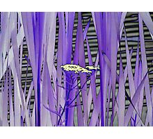 Bloom among the Reeds Photographic Print