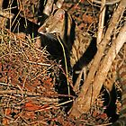 Nocturnal hunter by Dan MacKenzie