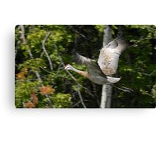 Fly like the Wind Canvas Print