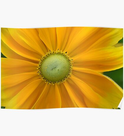 Flower Yellow Plant Leaves Green Poster