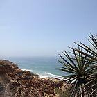 Ocean Sea Bluff Palm California Coast by HQPhotos