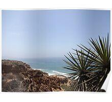 Ocean Sea Bluff Palm California Coast Poster