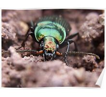 Ground Beetles Insect Nature Forest Poster