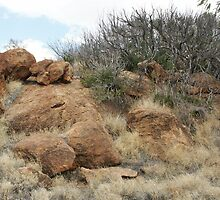Outback by Bob Hardy