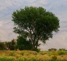 Lone Tree by marilyn diaz