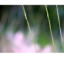 Simply Simple~ Photographic Print