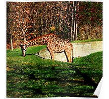 FALL SCENIC GIRAFFE APPAREL-PILLOWS-JOURNAL-TOTE BAG,DUVET,SCARF,MENS GRAPHICH TEE SHIRTS ECT... Poster