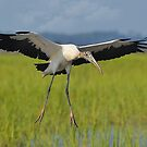In For A Landing by Kathy Baccari