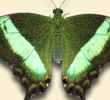 Emerald Swallowtail  Sticker