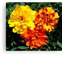 Flowers Marigolds Yellow Orange Rust Canvas Print