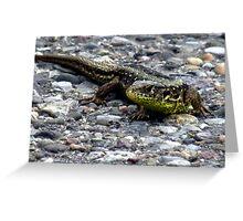 Sand Lizard Reptile Animal Nature Lizard Greeting Card