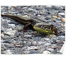 Sand Lizard Reptile Animal Nature Lizard Poster