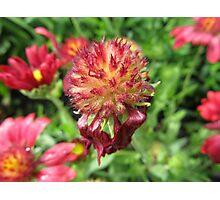 Plant Flower Nature Garden Plant -flowered Photographic Print