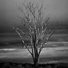 Tree Dead Winter Branches Limbs Autumn Fall by HQPhotos