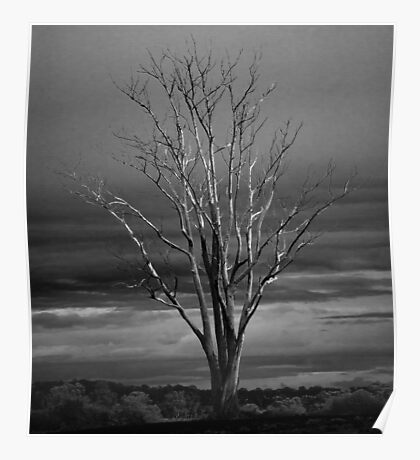 Tree Dead Winter Branches Limbs Autumn Fall Poster