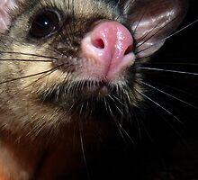Hellooo possum! by Meg Hart