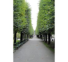 Mirabell Garden Alley  Photographic Print