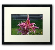 Flower Garden Blossoms Red Framed Print