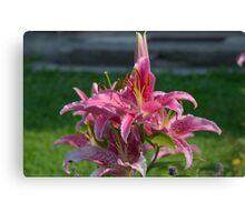 Flower Garden Blossoms Red Canvas Print