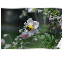 Flower Purple Insect Hummel Poster