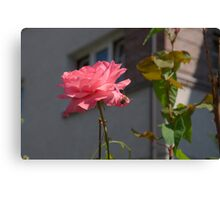 Rose Pink Insect Single Canvas Print
