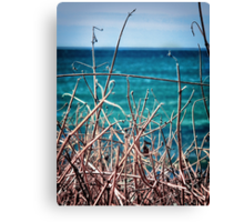 seagrass Canvas Print