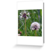 Withered Dandelion Flower Meadow Plant Greeting Card