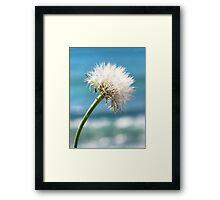 dandelion sea Framed Print
