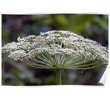 Wild Flower Nature Plant Poster