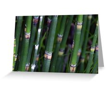 Scouring Rush Horsetail Plant Nature Green Greeting Card