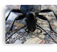 Insect Beetle Ground Beetles Carabus Nature Canvas Print