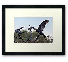 Two Cormorants Framed Print