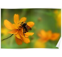 Bumble Bee Busy Poster