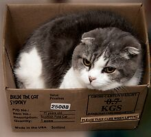 Cool Cat in small box. by ronsphotos