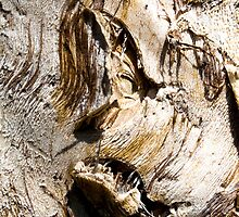 Ghastly Image in a Paperbark Tree Trunk. by ronsphotos
