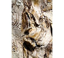 Ghastly Image in a Paperbark Tree Trunk. Photographic Print