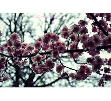 Early Bloomers Photographic Print