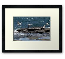 Follow that fish..... Framed Print