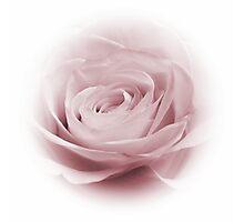 Lilac Whisper Photographic Print
