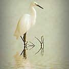 Little Egret by shalisa