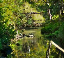 Rush Creek in the Golden Sun by mtmeegallery