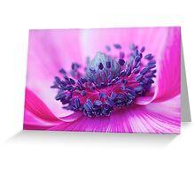 More Beautiful: Anemone Poppy Greeting Card