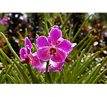 Purple flowers inside the National Orchid Garden in Singapore Photographic Print