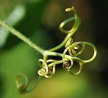 Tendrils by Heather Thorsen