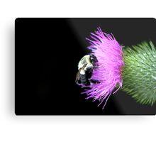 Bumble Bee on Thistle Metal Print