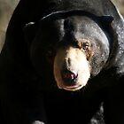 Bear It All by Nicole Sedlacek