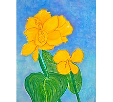 Yellow Canna Flower Photographic Print
